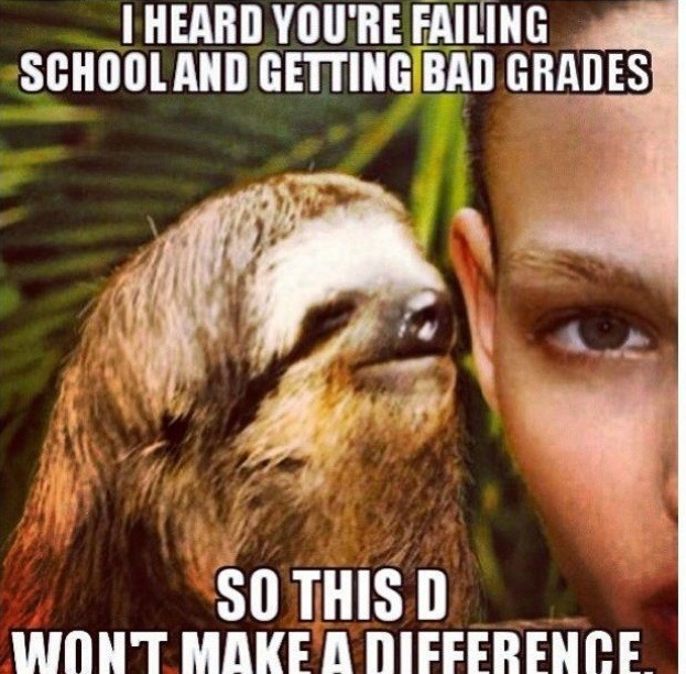 Funny Sloth Memes 10