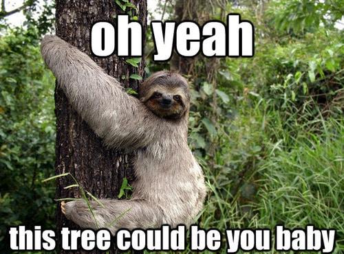 Funny Sloth Memes 15