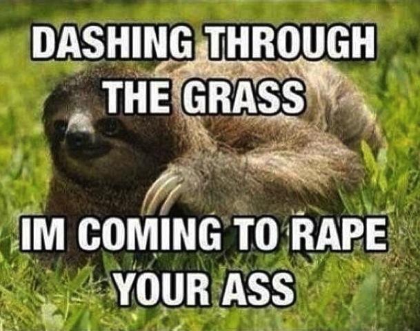 Funny Sloth Memes 9