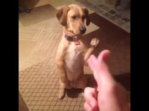 LOL! Dog Plays Dead Vine (Watch)