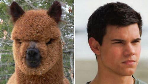 Image Taylor-Lautner-and-this-Alpaca.jpg
