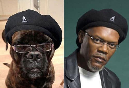 Image Samuel-Jackson-and-this-dog.jpg