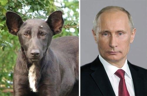 Image This-dog-and-Vladimir-Putin.jpg