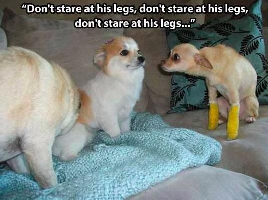 Funny Pix 5