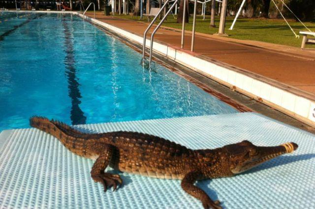 Meanwhile in Australia Pics 5