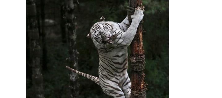 10 Amazing Photos of Amazing Moments in Wildlife