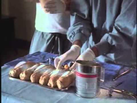 "Classic Van Wilder – ""Dog Pastry"" Anyone? (Video)"