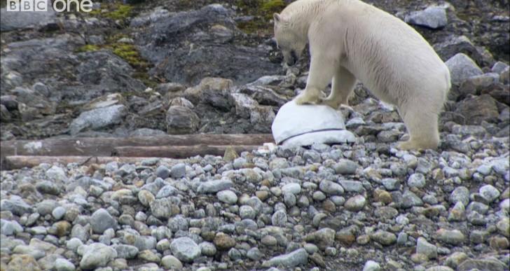 Polar Bears Get Pissed, Smash the Spy Cams (Video)
