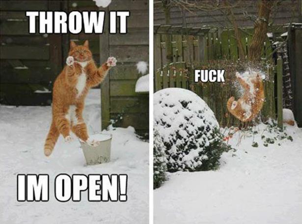 Funny Animal Meme